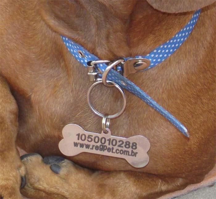 RegPet-ID - Identificação de Animais e Sistema Web para Recuperação de Desaparecidos