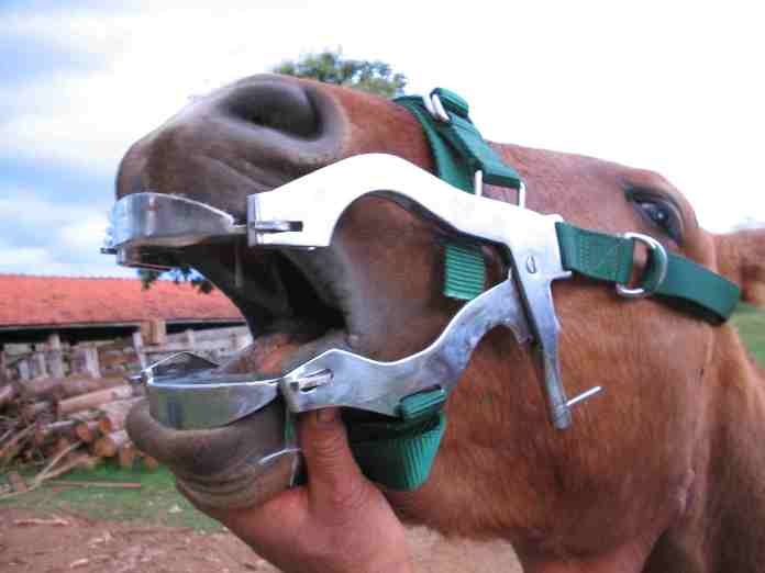 Abridor de Boca para Equinos