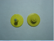 Boton sem marcação + Macho