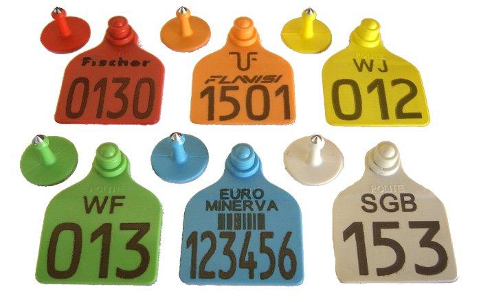 Caixa com 50 Cj Brinco Grande Bovino Personalizado (Nome, logomarca, desenho) para Manejo de Gado e Macho com Ponta Metalica