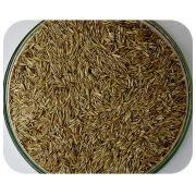 Sementes Azevém Perene (Tetraplóide) - Caixa com 1,0 kg
