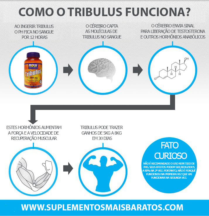 Como funciona Tribulus Terrestris Now foods