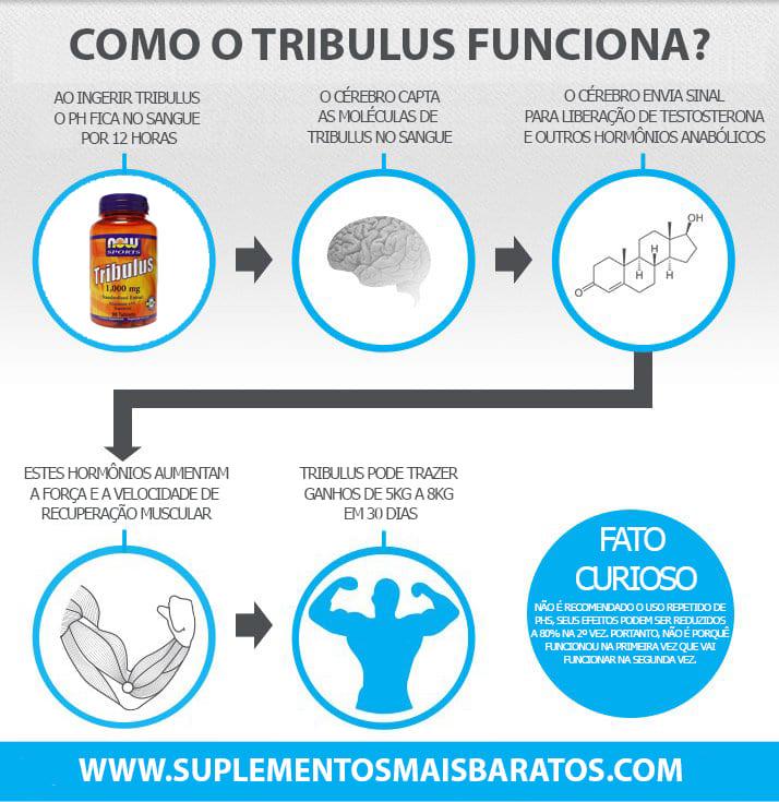 Como funciona Tribulus Terrestris e benefícios