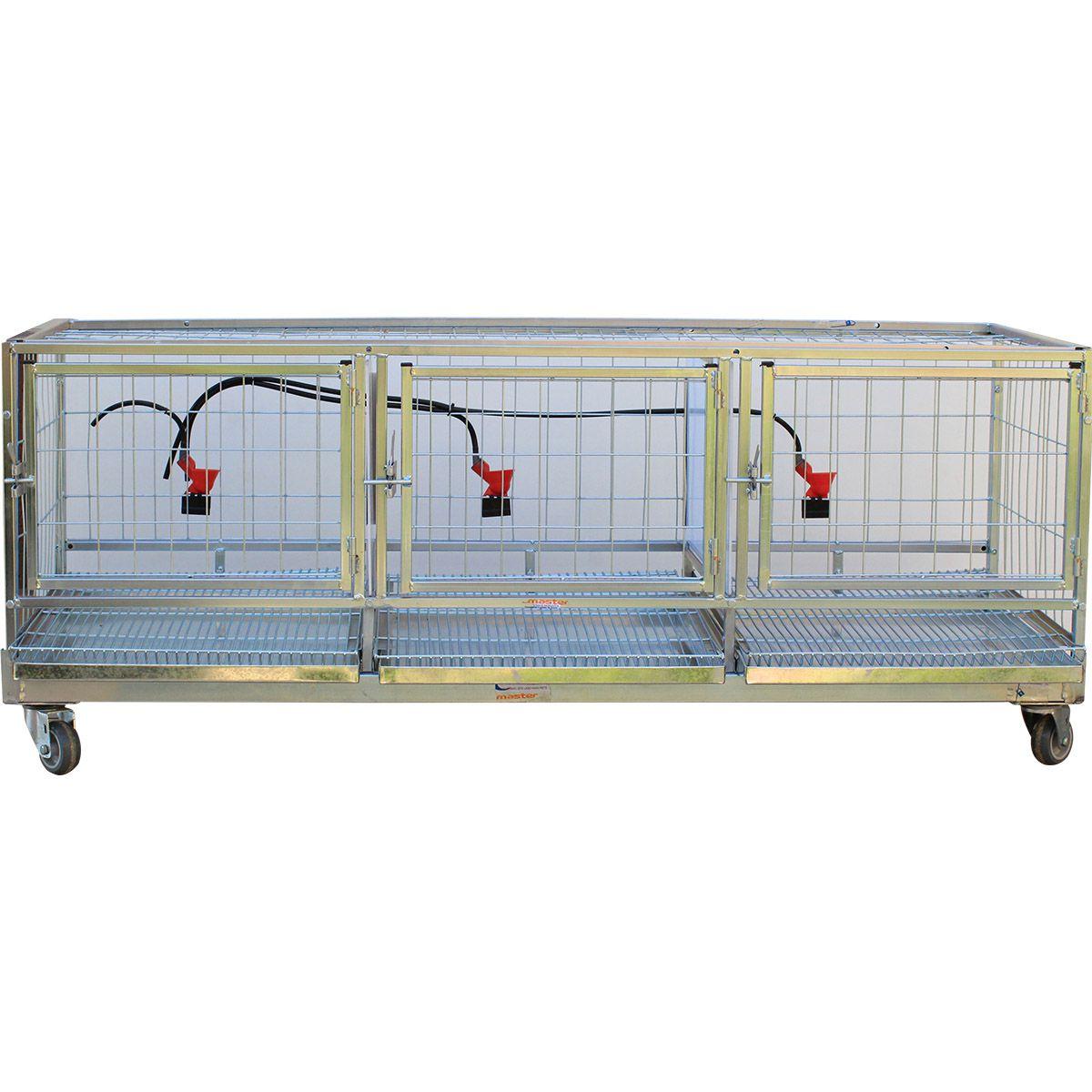 Bateria de gaiolas para galinha - 1 Módulo
