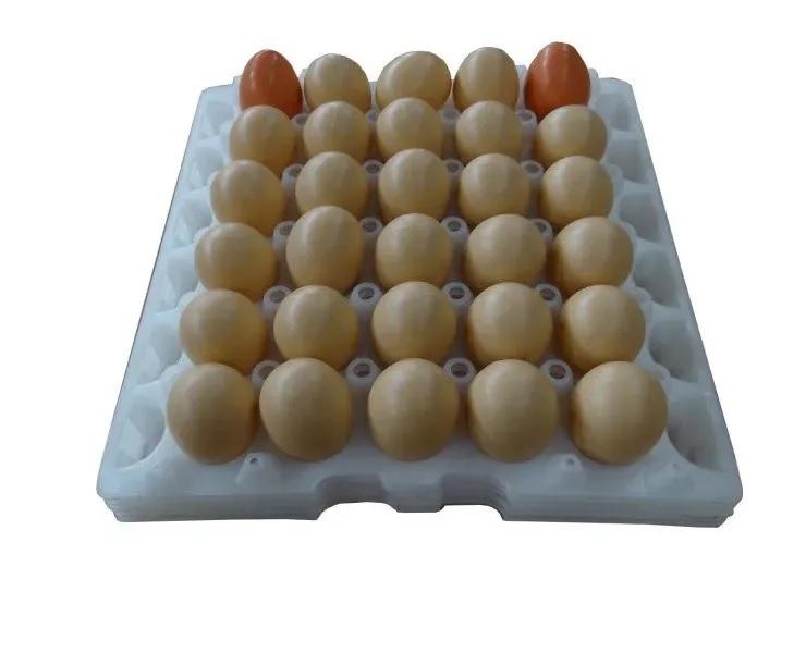 kit com 05 Bandejas Plástica para  Transporte De Ovos