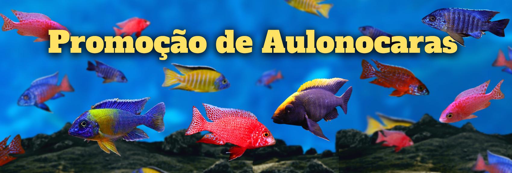 https://www.rsdiscus.com.br/loja/busca.php?loja=102848&palavra_busca=aulonocara