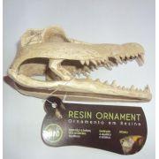 Soma Fish Esqueleto Crocodile Skull PQ