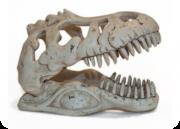 Soma Fish Esqueleto Dino T-Rex Skull Gd ( 040229 )