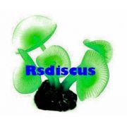 Soma Fish Coral Mushroom Long System verde ( 070114 )