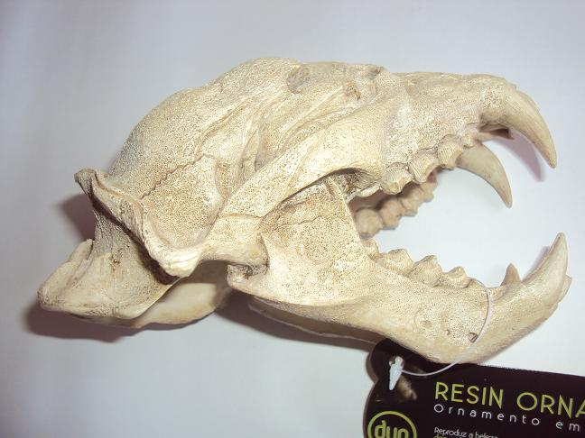 Soma Fish Esqueleto Puma Skull (Ape Skull)