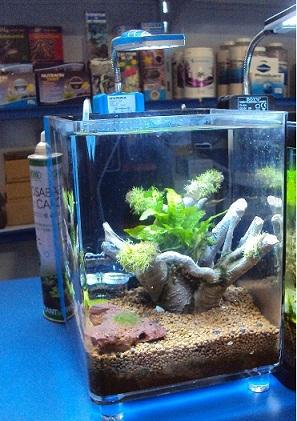Soma Fish Tronco de Resina com Raiz P ( 08 ) ( 054043 )