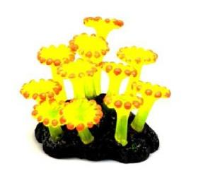 Soma Fish Coral Zoanthus Palithoa amarela ( 040193 )