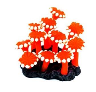 Soma Fish Coral Zoanthus Palithoa laranja ( 040183 ) (L)