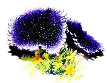 Soma Fish Coral Mix 10 ( 078011 )