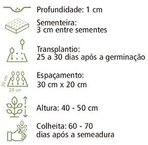 Sementes Almeirão Folha Larga 20En 700mg - Topseed