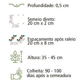 Sementes Cenoura Brasília 20Env 700mg - Topseed