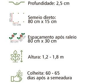 Sementes Feijão-de-Vagem 20Env 2,1g - Topseed