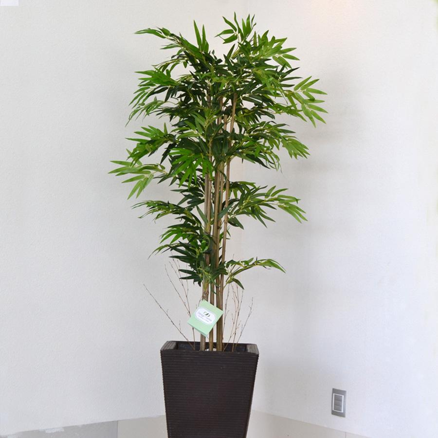 Plantas de bambu plantas artificiais bambu de madagscar - Bambu planta exterior ...