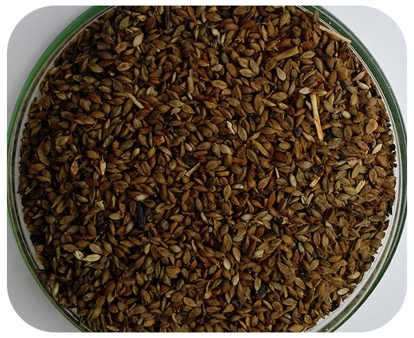 Sementes Brachiária  humidícola - Caixa com 1,0 kg (72%VC)
