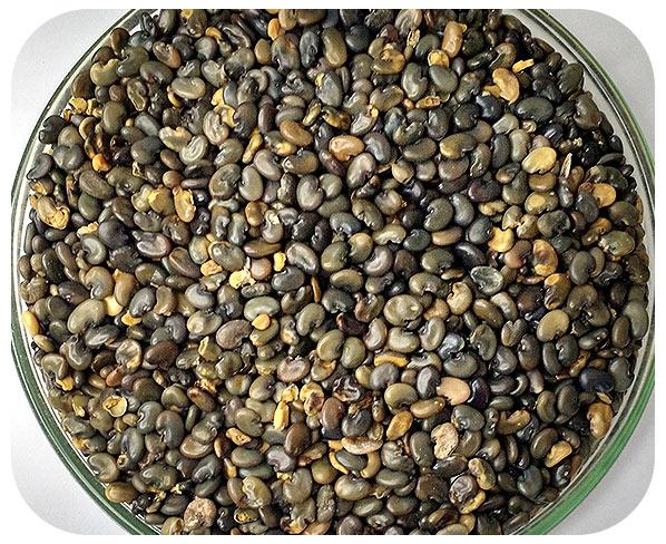 Sementes Crotalária Juncea - Caixa com 3 kg