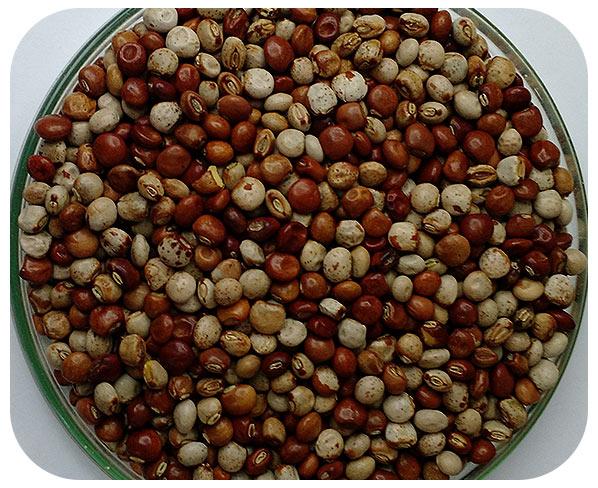 Sementes Feijão Guandu - Caixa com 3 kg