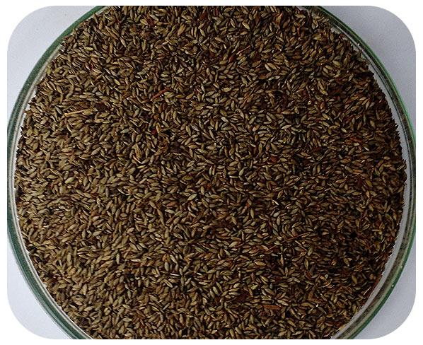 Sementes Tanzânia - Caixa com 2 kg (72%VC)