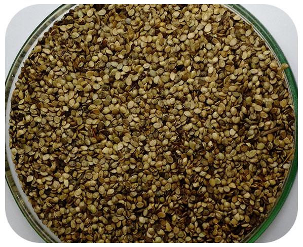 Sementes Grama Batatais - Caixa com 1 kg