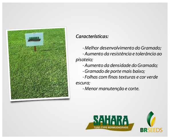 Sementes Grama Bermuda Sahara - Caixa com 500 gr