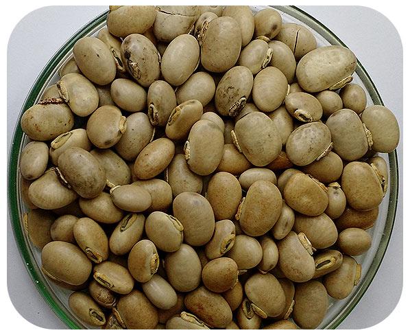 Sementes Mucuna Cinza - Caixa com 3 kg