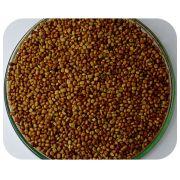 Sementes Calopogônio - Caixa com 3 kg