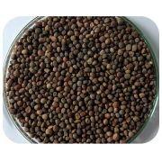 Sementes de Ervilhaca - Caixa com 3 kg