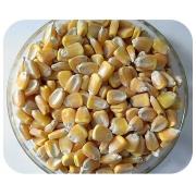 Sementes de Milho - AL Piratininga - Caixa com 2 kg