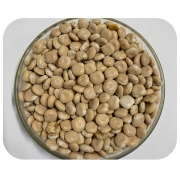 Sementes de Tremoço Branco - Caixa com 3,0 kg