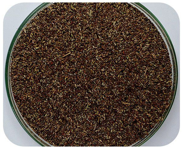 Sementes Capim Aruana - Saco 10 kg - (32%VC)
