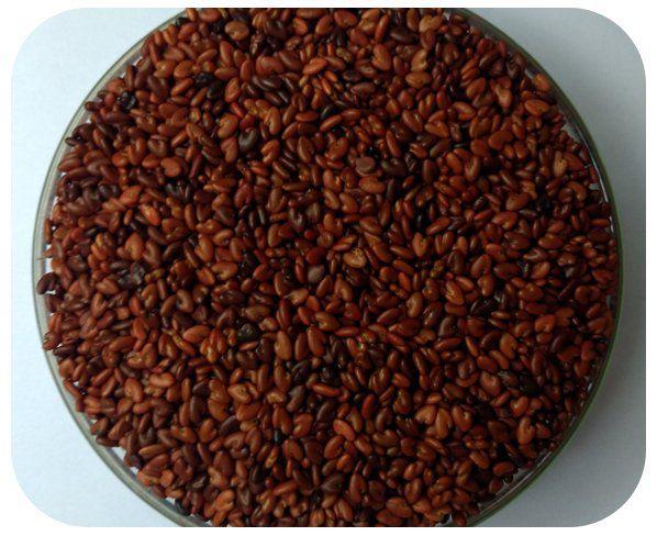Sementes Crotalária Breviflora - Caixa com 3 kg