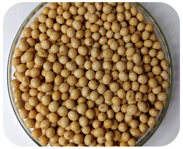 Sementes de Soja BRS 284 - Caixa com 3 kg