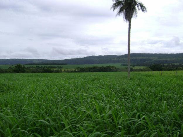 Sementes Tanzânia - Saco com 10 kg (32%VC)