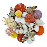 Conchas Naturais Variadas - 100g