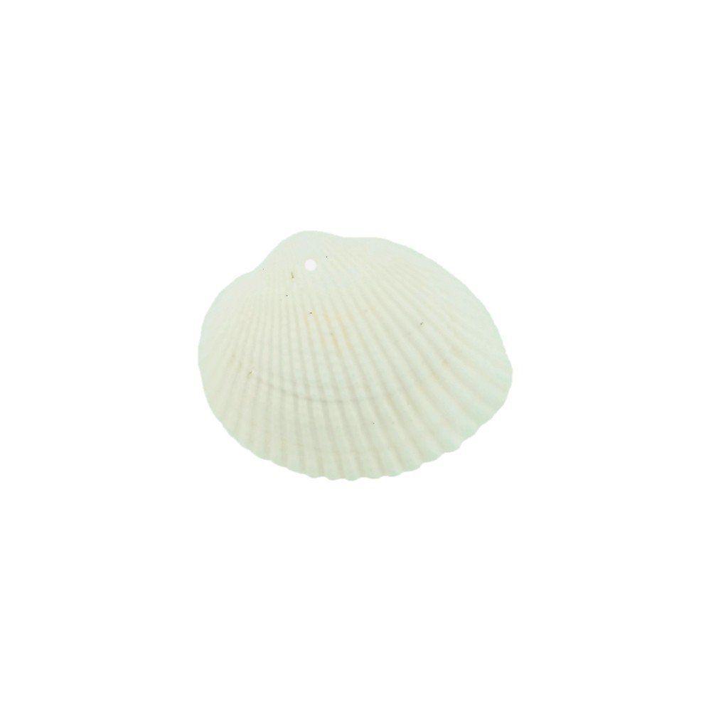 Pingente Concha Natural - 25mm - 25g  - Nathalia Bijoux®