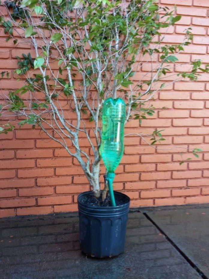 Kit 10 gotejadores para plantas Petgotta irrigação por gotejamento