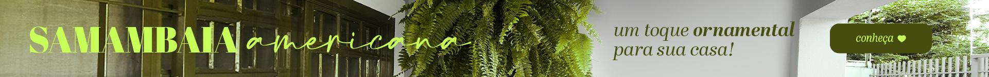 kit completo para plantas samambaia