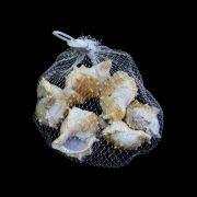 Conchas Brancas e Bege para decoração 100g