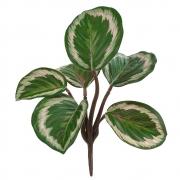 Folhagem Calathea Artificial Real Toque com Proteção UV X6 Verde 20cm - 41119001