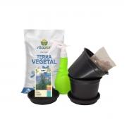 Kit Completo Horta em Vasos Alecrim