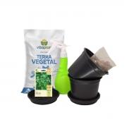 Kit Completo Horta em Vasos Salsa