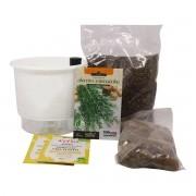 Kit Completo Inicial Branco: Meu Primeiro Plantio de Alecrim + Manual de plantio