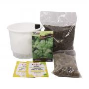 Kit Completo Inicial Branco: Meu Primeiro Plantio de Coentro + Manual de plantio