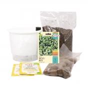 Kit Completo Inicial Branco: Meu Primeiro Plantio de Hortelã + Manual de plantio