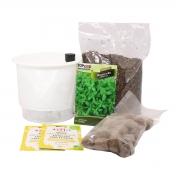 Kit Completo Inicial Branco: Meu Primeiro Plantio de Manjericão + Manual de plantio