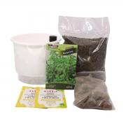 Kit Completo Inicial Branco: Meu Primeiro Plantio de Manjerona + Manual de plantio